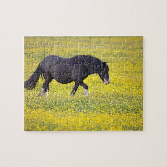 A Horse Walking In A Field Of Yellow Flowers Jigsaw Puzzle