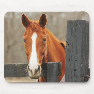 A Horse Wearing A Blanket At The Corner Fencepost Mouse Pad