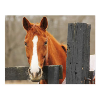 A Horse Wearing A Blanket At The Corner Fencepost Postcard