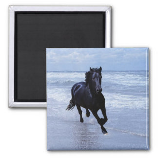 A horse wild and free 2 inch square magnet