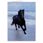 A horse wild and free cards