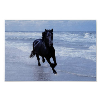 A horse wild and free poster