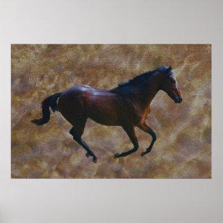 A horses gait poster