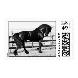 A horses humility postage