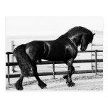 A horses humility postcard