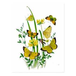 A Host of Butterflies Postcard