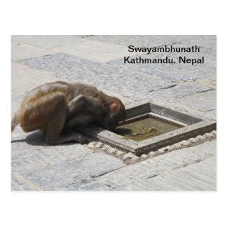 A Hot Drink in Swayambhunath Postcard