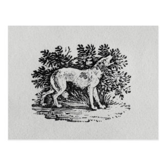 A Hound from 'History of Quadrupeds' Postcard