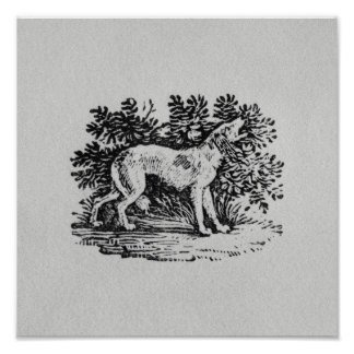 A Hound from 'History of Quadrupeds' Poster