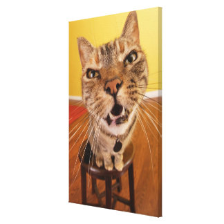 A humorous little cat sits on a stool in a canvas print