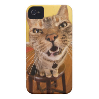 A humorous little cat sits on a stool in a iPhone 4 cover