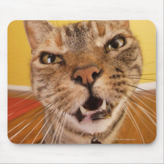 A humorous little cat sits on a stool in a mouse pad