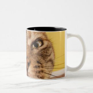 A humorous little cat sits on a stool Two-Tone coffee mug