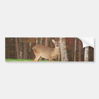 A Hunter's Dream Deer Bumper Sticker
