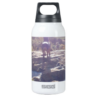 A Jack Russell's Irish Adventure Insulated Water Bottle