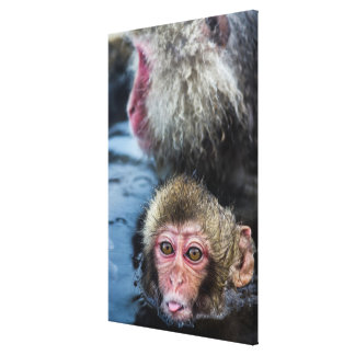 A Japanese Macaque Baby Sticking It'S Tongue Out Canvas Print