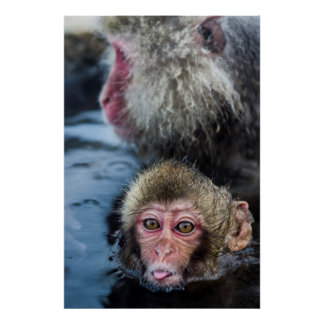 A Japanese Macaque Baby Sticking It'S Tongue Out Poster