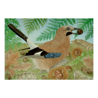 A Jay in the fall Posters