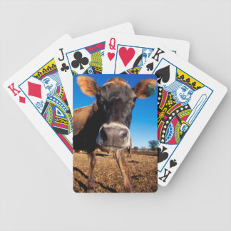 A Jersey cow being inquisitive Bicycle Playing Cards