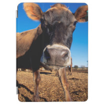 A Jersey cow being inquisitive iPad Air Cover