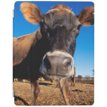 A Jersey cow being inquisitive iPad Smart Cover