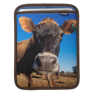 A Jersey cow being inquisitive Sleeve For iPads