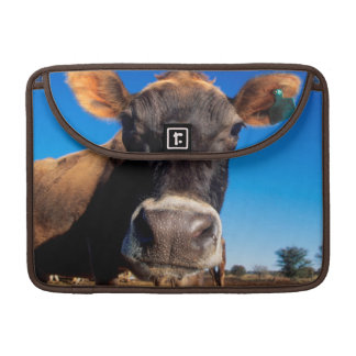 A Jersey cow being inquisitive Sleeve For MacBook Pro