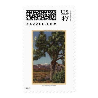 A Joshua Palm in Bloom in Californian Desert Postage Stamp