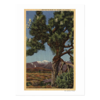 A Joshua Palm in Bloom in Californian Desert Postcard