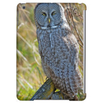 A juvenal Great Grey Owl1 iPad Air Cover
