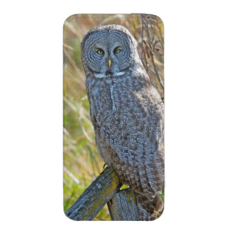 A juvenal Great Grey Owl1 iPhone 5 Pouch