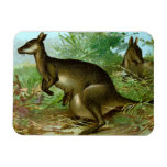 A Kangaroo and Her Joey Magnet