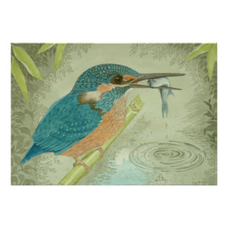 A Kingfisher catches a fish Poster