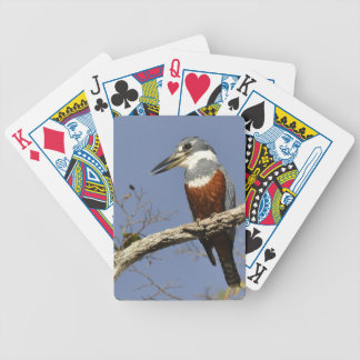 A Kingfisher Perches in a branch of a Tree Card Decks
