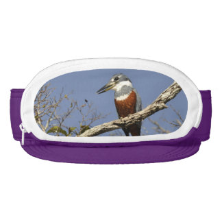 A Kingfisher Perches in a branch of a Tree Visor