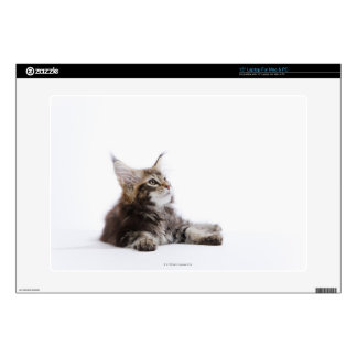 "A kitten of Maine Coon cat Skins For 15"" Laptops"