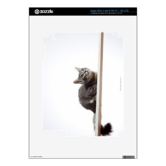 A kitten of Saiberian cat on the board iPad 3 Decals