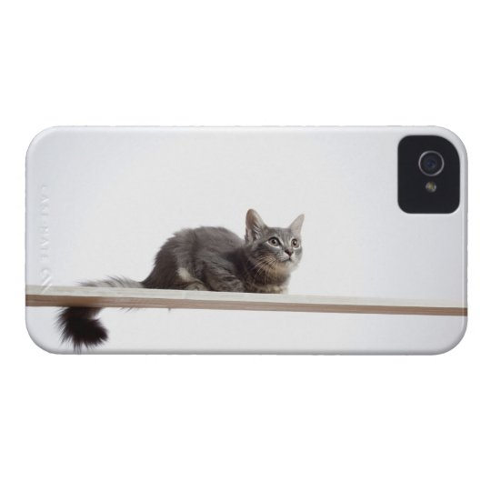 A kitten of Saiberian cat on the board iPhone 4 Cover