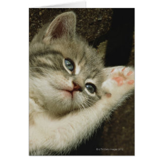 A kitten, with large blue eyes, lays on it's card