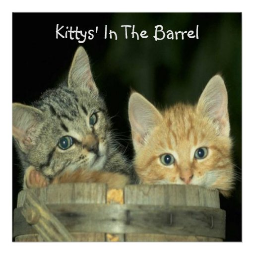 a, Kittys' In The Barrel Poster