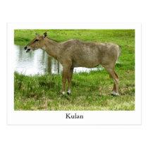 A Kulan Postcard, Animals, Mule, Donkey Postcard