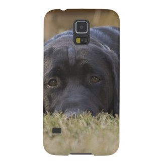 A Labrador Retriever puppy. Galaxy S5 Cover
