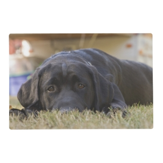 A Labrador Retriever Puppy. Placemat at Zazzle
