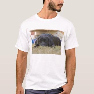 A Labrador Retriever puppy. T-Shirt