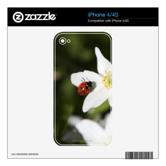 A ladybird on a wood anemone Stockholm Sweden iPhone 4S Skin