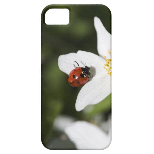 A ladybird on a wood anemone Stockholm Sweden. iPhone SE/5/5s Case