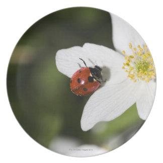 A ladybird on a wood anemone Stockholm Sweden. Melamine Plate