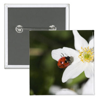 A ladybird on a wood anemone Stockholm Sweden Pinback Button