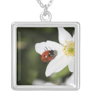 A ladybird on a wood anemone Stockholm Sweden. Square Pendant Necklace