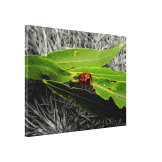 A Ladybug on Willow Leaves on Canvas Canvas Print